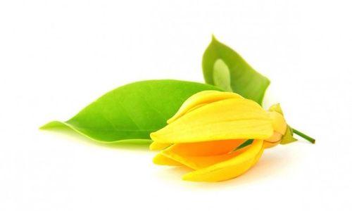 olio-essenziale-ylang-ylang